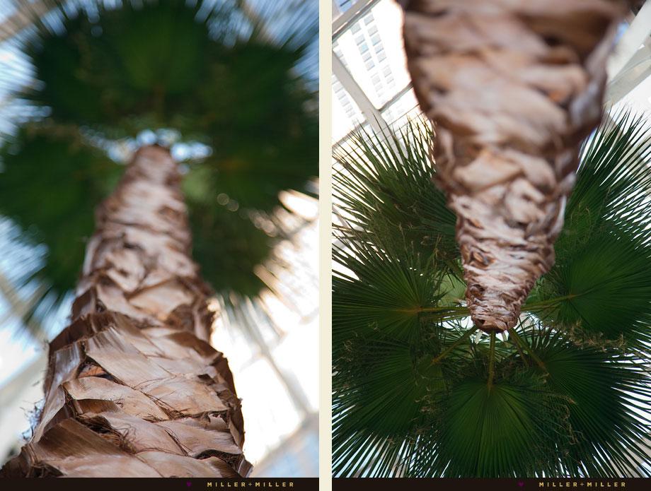Pazzo's atrium palm trees