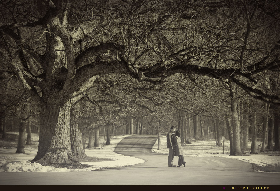 oak tree outdoor winter engagement photos evanston