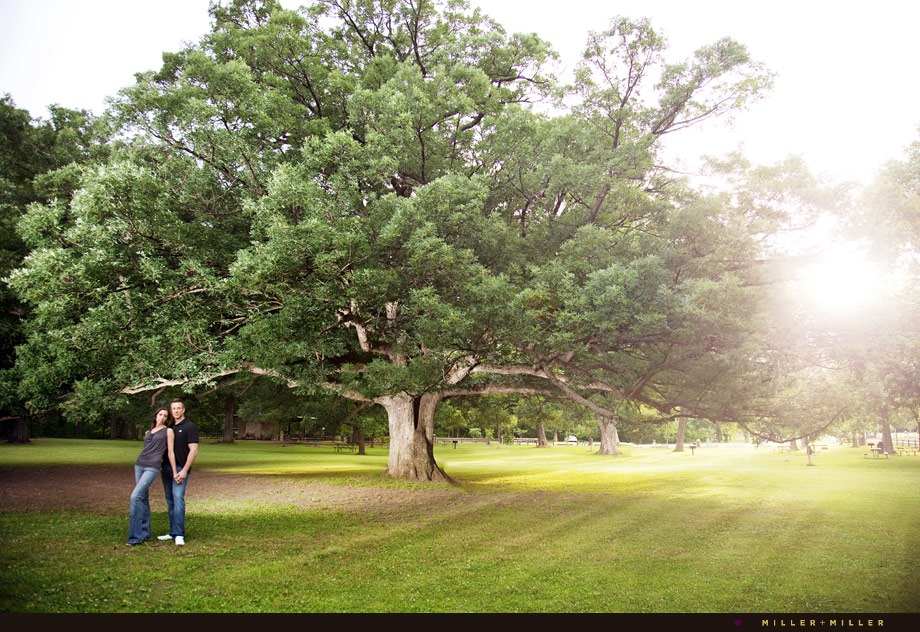 huge old tree engagement image