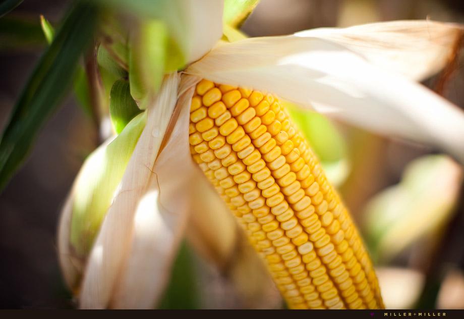 illinois commercial photographer corn cob